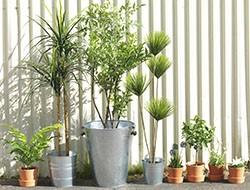 plantas y maceteros