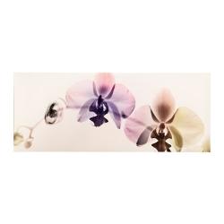 PJÄTTERYD Cuadro orquídea